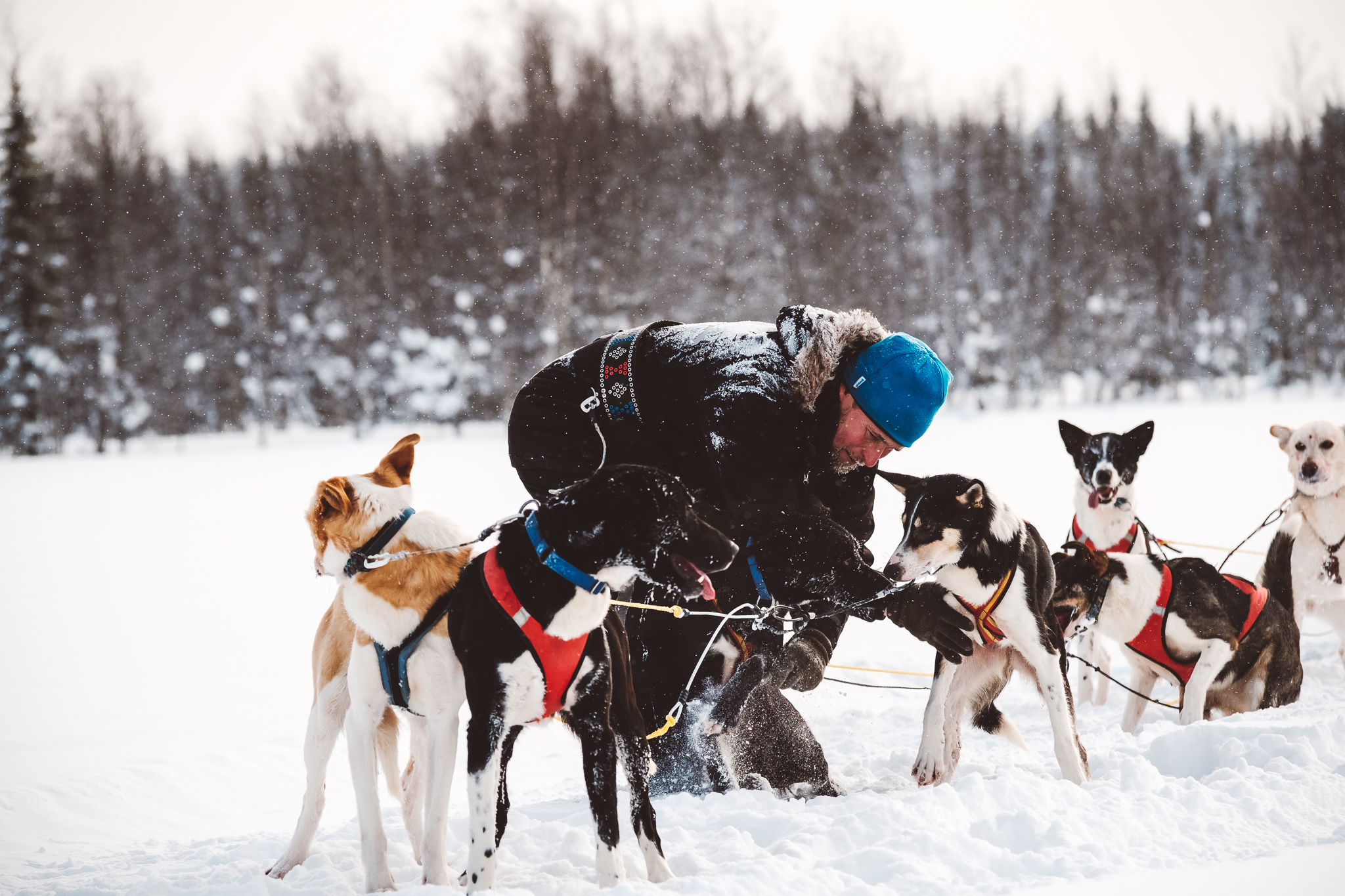 Andi Weiland With sledge dogs in Lappland